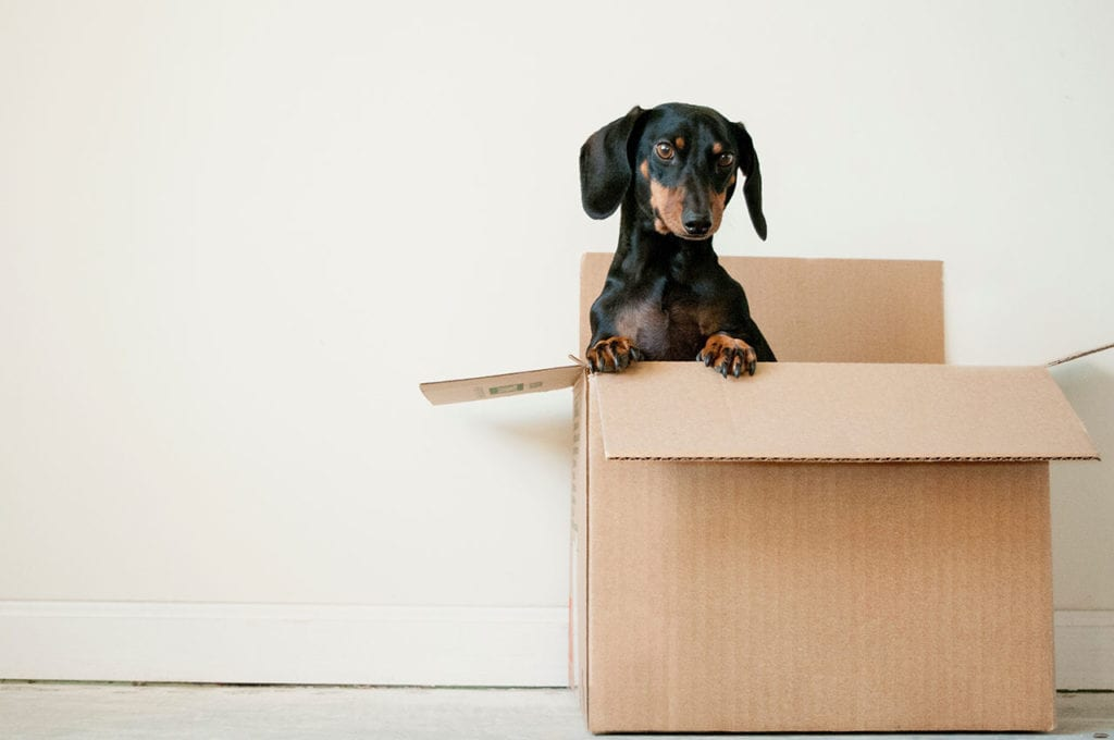 An image of a dog inside the box